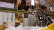 Burmesen freuen sich über Katzen- und Hunde-Cafés