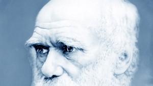 Darwins Karikaturen