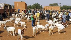 Ziegen statt Geld für die Verwandten in Afrika