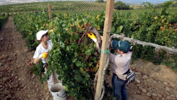 430.000 Liter Wein in Rüdesheim konfisziert