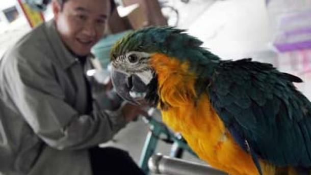 Papagei in Großbritannien an gefährlichem Virus H5N1 verendet