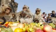 Affen werden bei Fest verwöhnt