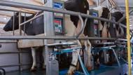 Ende der Milchquote - Chance und Herausforderung