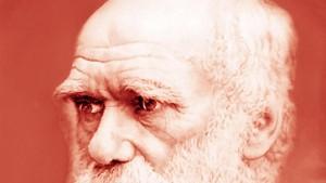 Darwins Rechnungen