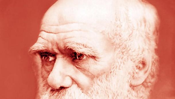 Bild / Qudratbild / Darwin / rot