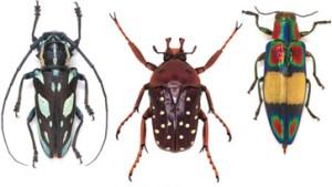 Wer zählt die Käfer, nennt die Namen ...