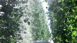 Bauernspione im Unterholz
