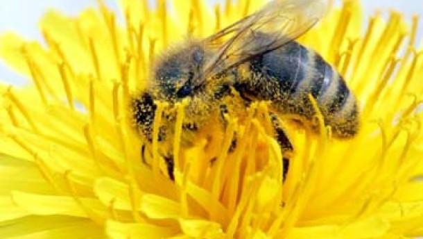 Bienen schauen dich an