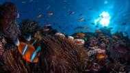 Hilfe für das Great Barrier Reef