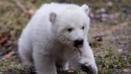Bühne frei für Münchens Eisbärenmädchen