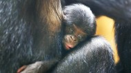 Nachwuchs im Frankfurter Zoo