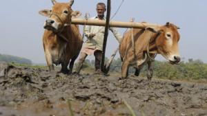 Arme Bauern in der Schuldenfalle