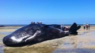 Tote Wale an Küste gestrandet