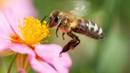 Zahl der Insekten um 75 Prozent gesunken