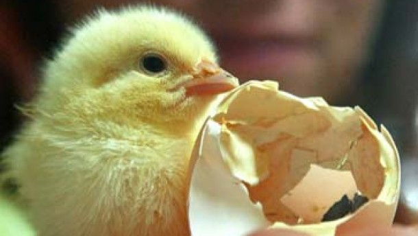 Vogelgrippe nicht a la carte