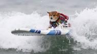 Hunde surfen um die Wette