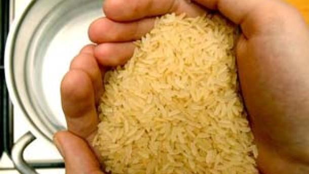 Reis mit etwas Homo sapiens