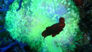 Der Duft der Seeanemone