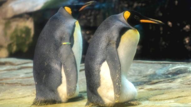 Berlins schwule Pinguine