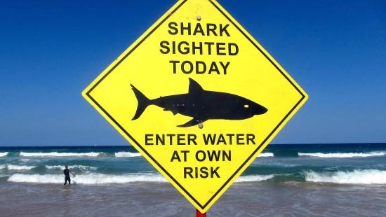 Tödlicher Hai-Angriff auf Taucherin