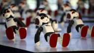 Ein Roboter zum Selberbauen
