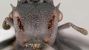 Die Ameise fällt nicht weit vom Stamm