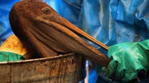20 Milliarden Dollar für Ölpest-Opfer