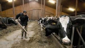 Beliebter Bauernstand