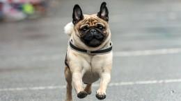 Wettlauf für Hund und Herrchen