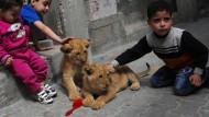 Familie lebt mit Löwenbabys zusammen