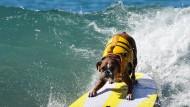 Hunde auf den Wellen