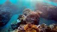 Korallen am Great Barrier Reef sterben ab