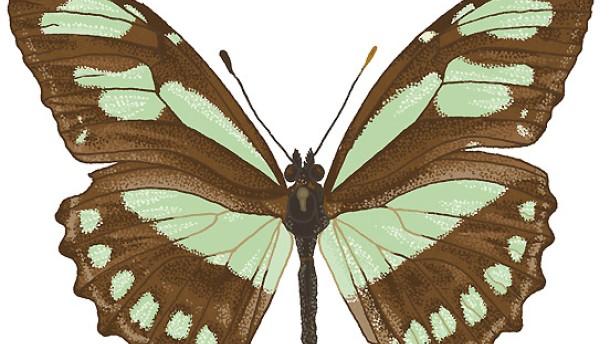 Ein Koffer voller Schmetterlinge