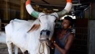 Pflegeheim für Rinder in Indien