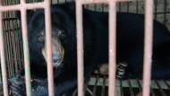 Bären von Galle-Farm in Vietnam gerettet