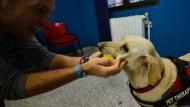 Hunde therapieren Gefangene