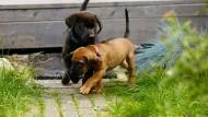 Hundewelpen haben eigenen Super Bowl