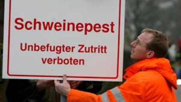 Schweinepest in Nordrhein-Westfalen