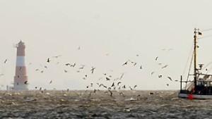 Das Geschacher um die Fischfangquoten