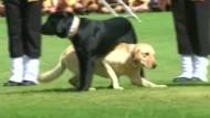 Faszinierende Tier-Show in Indien