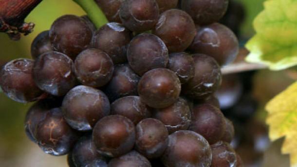 Wasser in den Wein gegossen