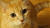 Katze plündert Fischtheke