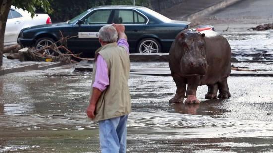 Zoo in Tiflis wieder geöffnet