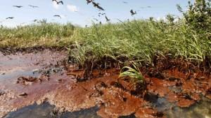 """Jetzt spricht auch BP von einer """"Katastrophe"""""""
