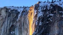 Goldregen im Yosemite Nationalpark