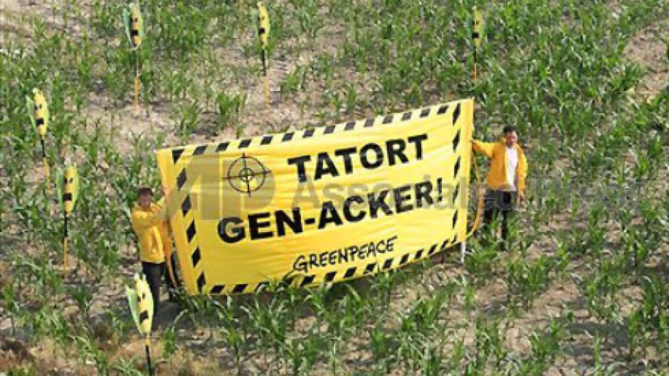 Im Kampf gegen Gen-Technik blockieren Gegner einen Maisacker